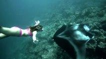 Elle nage avec une raie manta géante. Plongée exceptionnelle