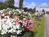 Botanischer Garten Berlin Dahlem / Botanical Garden / Jardin botanique / Jardín botánico / Giardino botanico