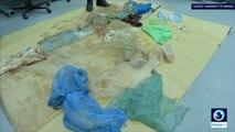 30 sacs plastiques dans le corps d'une baleine