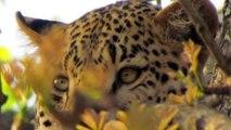 My African Safari photos