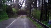 Impressionnant, une série d'arbres chute sur une route !