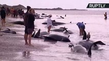 Hundreds of Whales Die After Largest Mass Stranding in Decades
