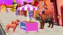 Tiger Finger Family Songs | Tiger Twinkle Twinkle Little Star, Hot Cross Buns &