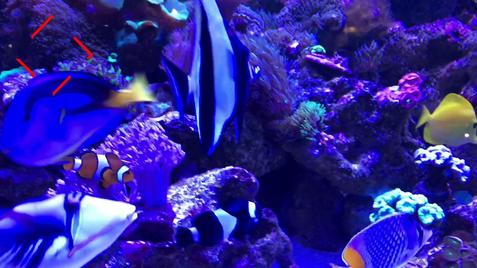 O canal de aquarismo DAYLYMOTION | INSCREVA-SE