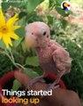 Cette oiseau sans plume est tellement mignon...