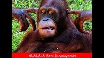 #3 Tatlı ve İlginç Hayvanlar - Komik Hayvanlar Komik Videolar 2017 Yok Artik!