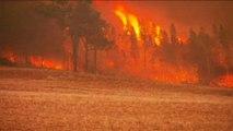 Australian firefighters battle bushfires in New South Wales