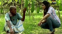 বাংলাদেশে অর্গানিক পদ্ধতিতে বিষমুক্ত সবজি চাষ করে কৃষকের নতুন উদ্বোধন