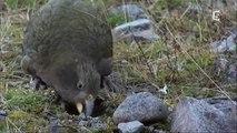 Documentaire animalier 2016 les oiseaux des animaux intelligents ? documentaire en frança