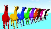 3D Horse Colours Songs Collection, Learning Colours For Children Nursery Rhymes and Songs