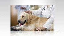 Pets First Wellness Center-Best Vet Service Providers in Bonita Beach, FL
