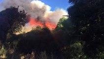 Bushfires Scorch More Than 600 Hectares Near Christchurch