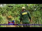 Seekor Gajah Ditemukan Mati Dengan Luka Tembakan di Pedalaman Kab. Aceh Timur - NET12