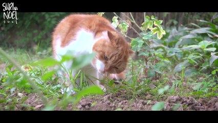 Suri & Noel family got a yard! with cat Cheesoon 수리노을가족 마당 생기다!! with 고양이 치순