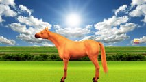 3D Horse Injection Colours Songs | Colours Songs For Kids | Colours Rhymes For Children