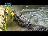 Born To Be Wild: Doc Nielsen Faces Very Aggressive Philippine Crocodile