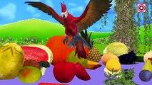 Aprende los Nombres de las Frutas y Verduras con Rompecabezas de Juguete   el Aprendizaje de los Niños Frutas y Verduras