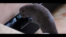 Chat surprit en train de faire une bêtise