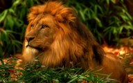 Ataques de animais selvagens, Batalha de animais selvagens, Batalha animal, curiosidade animal,  Animais selvagens, Conf
