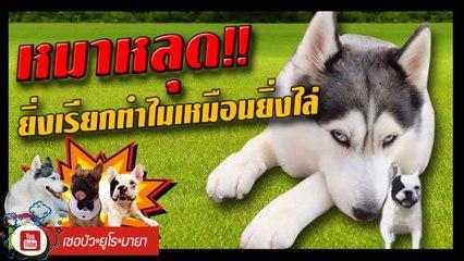 เชอบัว ยูโร มายา ตอนที่ 113  หมาหลุด  ยิ่งเรียกทำไมเหมือนยิ่งไล่