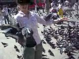 More pigeon attacks for Becky and Piazza Di San Marco