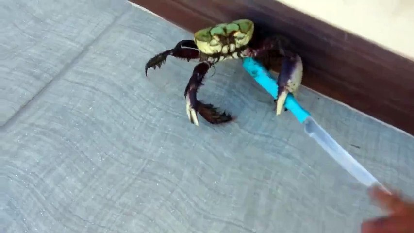 Armed Crab