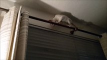 Ce chat est bien en galère perché là-haut