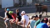 Ce taureau encorne un 4x4 de touristes en pleine rue... Flippant