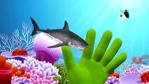 Sea Animal Finger Family Nursery Rhyme | Whale Orca Killer Whale dolphin octopus Daddy Fin