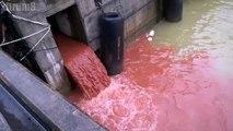 Công ty Formosa Hà Tĩnh, Khu kinh tế Vũng Áng, huyện Kỳ Anh, tỉnh Hà Tĩnh ngày 18/02/2017: Nước xả thải màu đỏ... được đ