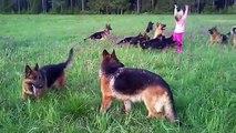 Après danse avec les loups : joue avec les chiens !