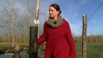 La chalarose menace le Marais Poitevin - Vendée