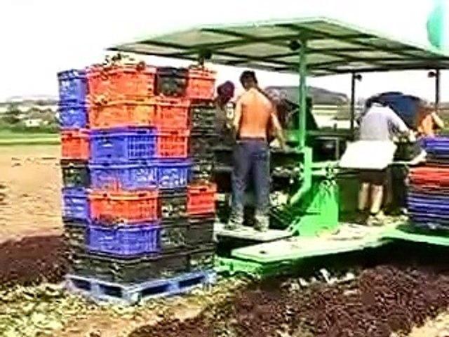 Nông nghiệp Nhật Bản | Godialy.com