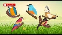 Tropical Rainforest Birds Singing Songs Birds Chirping