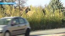 Hautes-Alpes : radar fictif à Pont Sarrazin, une bonne initiative selon les habitants !