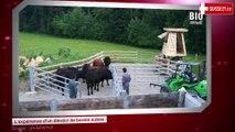 L'expérience d'un éleveur de bovins suisse