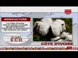 Business 24  Flash Eco Cote d'Ivoire Agriculture La Cote d'Ivoire ment en place un fons de garantie
