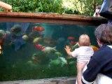 Léandre et les poissons (citadelle)