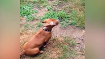 Quand nos chiens sont un peu perdu... Compil animaux drole