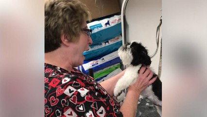 Funny pup throws the biggest hissy fit, and it has the groomer in stitches