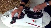 Gerçeğinden ayırt edemeyeceğiniz 3 Boyutlu yılan çizimi