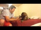 Il revient avec le nouvel occupant de la maison, et le présente à son chien... mais il n'avait pas prévu cette réaction