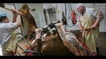 A Carne É Fraca - Documentário produzido pelo Instituto Nina Rosa [HD]