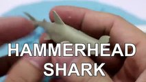 Learning Sea Creatures for Children with Sea Creatures