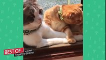 Funny Cats Compilation [Most See] Funny Cat Videos Ever