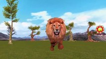 León Vs Buffalo Lucha Increíble   Animales Salvajes, Ataques De Leones Persecuciones De Los Ciervos   León Vs Venados De