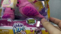 Little Live Pets Owl Tweet Talking Birds and Butterflies Toy Reviews