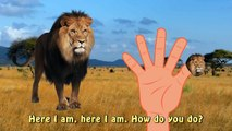 Finger Family Daddy Finger Lion Savane Animal | The Lion King Cartoons | Kids Nursery Rhymes