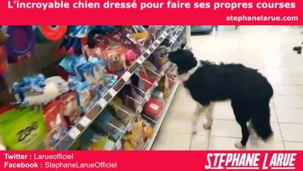 VIDEO BUZZ - L'incroyable chien dressé pour faire ses propres courses