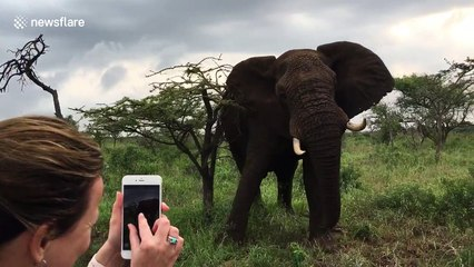 Elephant throws branch at jeep passengers